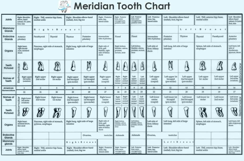 tooth-chart_-1024×678